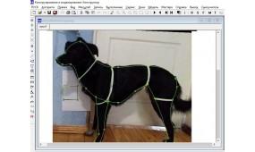 Одежда для собак: основные принципы Dog Friendly Style  и их реализация средствами информационных технологий
